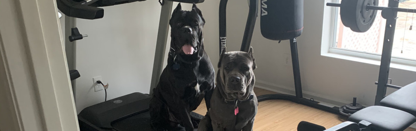 We want to workout to!